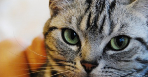 癒される!かわいい猫の画像と面白画像を集めました