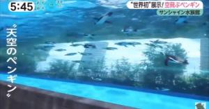 空飛ぶペンギン最新式の水槽、凄すぎサンシャイン水族館「天空のオアシス」