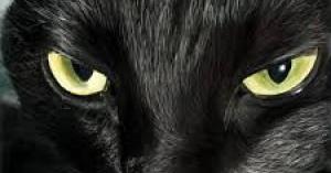 黒い猫がお母さんを殺した? 黒猫事件(佐賀女性鍼灸師殺人事件)とは
