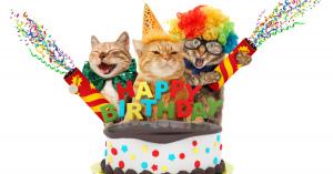 生まれてきてくれてありがとう♡ネコちゃんへの誕生日プレゼント