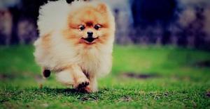 🐶もし愛犬が目の前で殺されたら? 貴方ならどうしますか? 「川崎ペット殺人事件」 男がとった行動とは?
