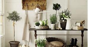 部屋の雰囲気がガラッと変わる!観葉植物レイアウト効果