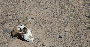家畜大量死の原因は「ゾド」…モンゴルで動物・人間を襲う社会問題とは
