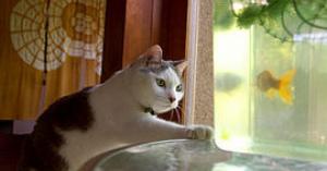 感情豊富!喜怒哀楽の豊かな猫さん画像集
