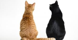 ネコちゃんが伝えたいのはこんなこと!しっぽでわかる11の気持ち