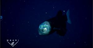 【深海生物】頭が透明な魚、裂けすぎな口…深海に棲むキモかわ生物たち【まとめ】