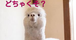 「どちゃくそ」とは、どんな意味?下品な言葉なの?