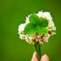小さな幸せを見つけたら大きな幸せがやってくる