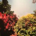 ヒーリング効果大!「テリ・ワイフェンバック」の写真が儚く美しい!