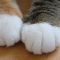 猫の手は見ているだけでも癒される!SNSで見つけた可愛いニャンコの手!