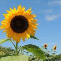 夏の暑さ対策に何してる?冷房を使わずに涼しくなる方法