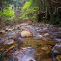森林浴でストレスを軽減?精神のバランスを保つ為にできること。