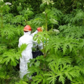 世にも恐ろしい「殺人植物」ランキング