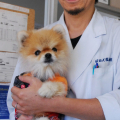 【九州豪雨】死んだと思っていた飼い犬、8日後に救出、と飼い主のリアル