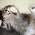 可愛い♡猫ちゃん動画まとめてみました♡