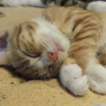 可愛い♡猫ちゃん動画まとめてみました♡PART2