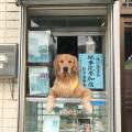【けしからん動画】巨乳JKにセクハラするお犬様が見つかるwwwwww