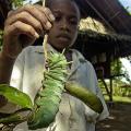 【世界一大きい○○】哺乳類から昆虫まで、世界の大きい生き物をご紹介!