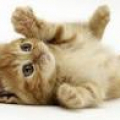 超かわいい猫動画まとめ