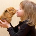 【東京・神奈川】可愛すぎる動物と触れ合えるオススメスポット10選