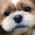 犬の世話と躾にうんざり…育犬ノイローゼ?ワンちゃんとの幸せを築く一番大切なこと♡
