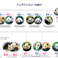 パンダの赤ちゃんは上野動物園だけじゃない、和歌山にも居る!【これも偏向報道?】