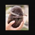 【癒し動物白書】超絶人気!「カワウソ」ほっこりする【画像&動画】スペシャルまとめ #獺