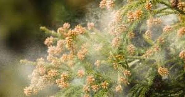 花粉症は治りません‼