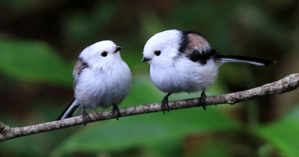 5月10日から愛鳥週間『Birdweak』今人気の可愛い鳥たち画像♬