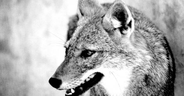 【社会派シリーズ】動物を「いじめる人」が日本には想像以上に多いって知ってますか? #動物虐待 #杉本彩