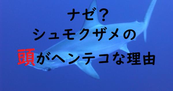 前、見えてないよね…?シュモクザメが持つヘンテコ頭のワケ【動物の謎】