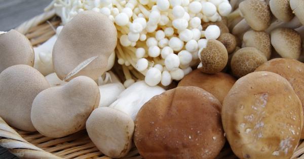 【絶品!秋の味覚】北海道の味♡落葉キノコ!ボリボリきのこ!色々なキノコ料理のレシピまとめてみました