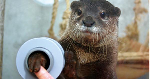 【かわいい!】カワウソに会える動物園・水族館【まとめ】