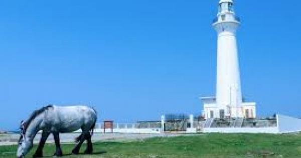 ややや、野生の馬!?日本で唯一の野生馬の見られる宮崎県都井岬へ観光に行こう!!