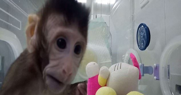 中国人がとうとう霊長類のクローン猿誕生に成功してしまう..