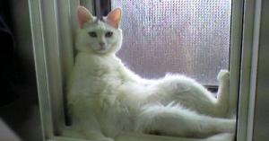 思わずニヤリ☆猫さんのかわいい笑えるコピペ