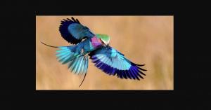 【世界の鳥】美しすぎる「バードウォッチング」鮮やかな色彩を堪能する【画像】まとめ #始祖鳥 #恐竜が起源 #Archaeopteryx
