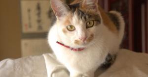 近年急増中の猫と仲良く飲めるバー・居酒屋