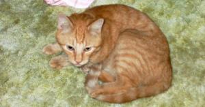 【感動】14年間行方不明だった猫