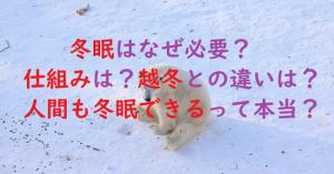 動物はなぜ冬眠する?冬眠しない動物は?熊・カエルの冬眠の仕組みと人間の可能性【生き物の謎】