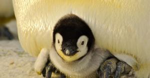 【更新中】動物の赤ちゃんにひたすら癒される画像まとめ【もふもふ】