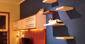【猫が楽しく暮らす家】画像でまとめてみました!