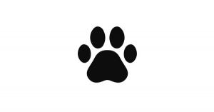 【雑学まとめ】狂犬病の致死率は、ほぼ100%