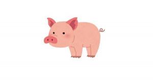 【雑学まとめ】豚の体脂肪率は15%前後