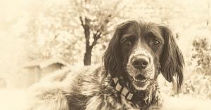 最高の友達・「犬たちが教えてくれたこと7選」