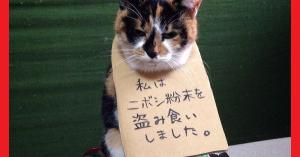 爆笑!反省する猫ちゃんが可愛過ぎる♡