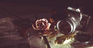 #イマハナ…国内、花の写真と絵画まとめ・どの雰囲気が好きですか?