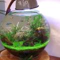 【魚を入れずに楽しむ水槽】小さなアクアリウム|世界でも愛されているMARIMO