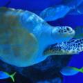 【夏こそ涼しい水族館に行こう!】神秘の海中生物と水族館のプチ情報まとめてみました