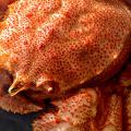 【カニの食べ方テク】おすすめの蟹の食べ方とか変な部位も食べ尽くす裏話などまとめてみました。